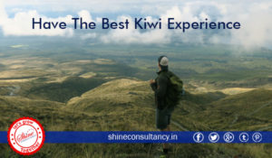 Have the best kiwi experience_shine consultancy